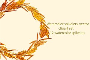 Watercolor spikelets, vector