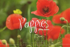 Poppies Photo Set