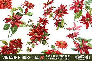 Vintage Poinsettia Illustrations