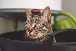 Portrait of a cat in a rubber basket