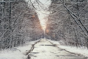 sunlight in snowy park with road in