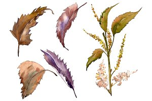 Sweet chestnut PNG watercolor leaves