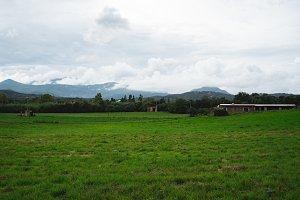 Sardinian Meadow