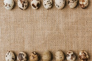 quail eggs laying in a rows on sackc