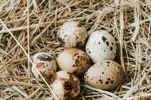 quail eggs laying on straw close to