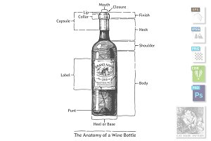 The Anatomy of a Wine Bottle