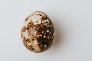 quail egg laying on white background