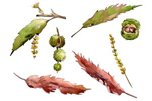 Autumn chestnut PNG watercolor plant