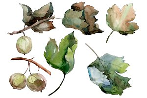 Gooseberry PNG watercolor plant set