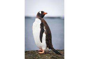 Penguin  standing on a stone pillar