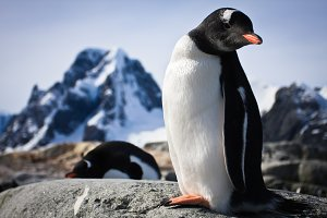 penguin standing on the rocks