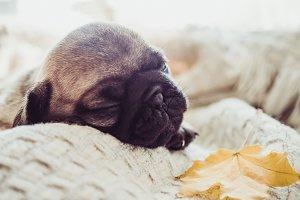Cute, sweet puppy lying on a blanket