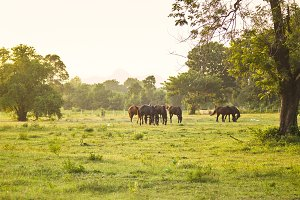 Grazing herd of horses in meadow