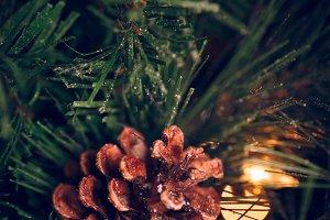 Pine cone on the Xmas tree