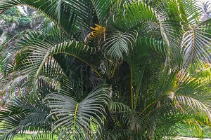 Palm tree tropical background.