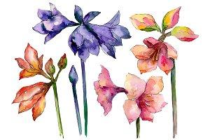 Beautiful watercolor amaryllis PNG