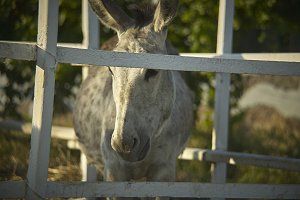 Caged Donkey