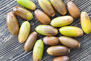 oak nuts - acorns