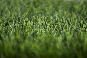 Artificial green grass texture