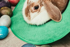 domestic rabbit lying in green hat w