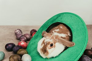 domestic bunny lying in green hat wi