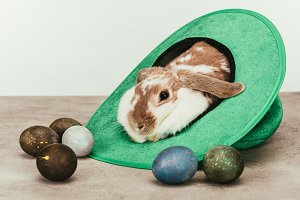 domestic rabbit lying in green hat w