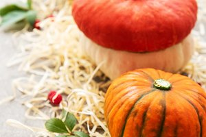 Colorful autumn pumpkins