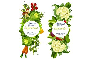 Organic natural vegetables vector