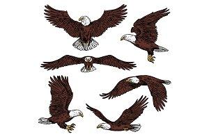 Bald eagle predatory birds vector