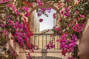 autumn plants and garden in Portugal