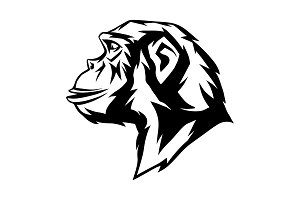 Wild monkey head.
