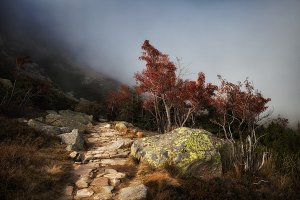 Path In Misty Mountains