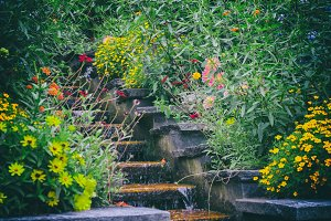 garden flowers with small waterfall