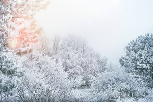 Winter landscape with snow trees