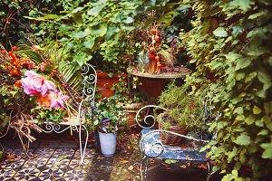 seasonal garden, autumn