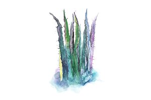 Watercolor hand drawn spiky cactus