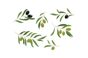 Olive branches with green and black