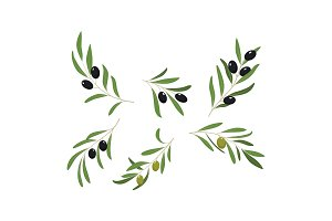 Olive branches with leaves and
