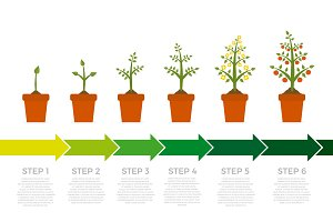 Vector infographic of plant growth