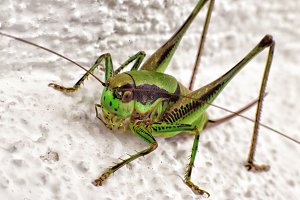 Close up of grasshopper sitting on r