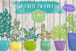 Houseplants Illustrations