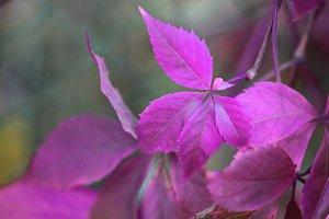 autumn leaf branch