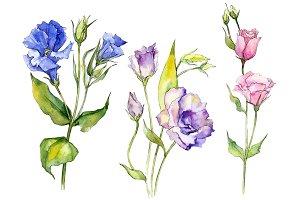 Delicate eustoma flower PNG set