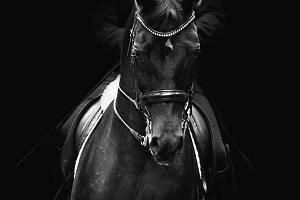 black dressage horse