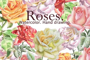 Watercolor roses. Hand drawing.