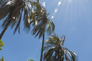 Palm trees in backlight