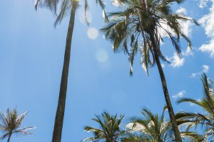 Palm trees in summer