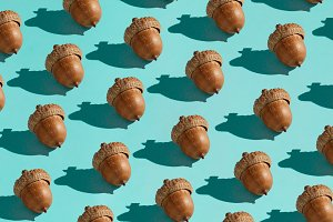Background made from acorn on the bl