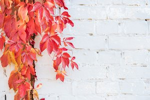 beautiful autumnal plants with red l