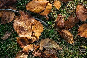 top view of brown autumnal leaves on